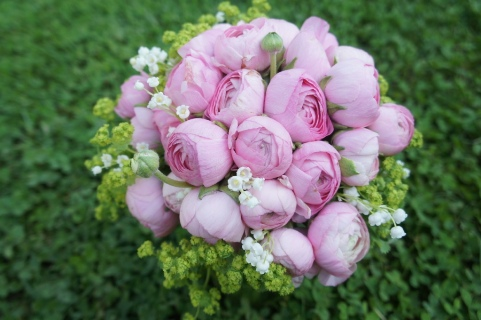 pink ranunculus france