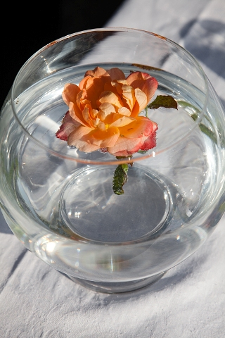 orange wedding flower
