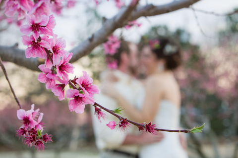 tree blossom wedding