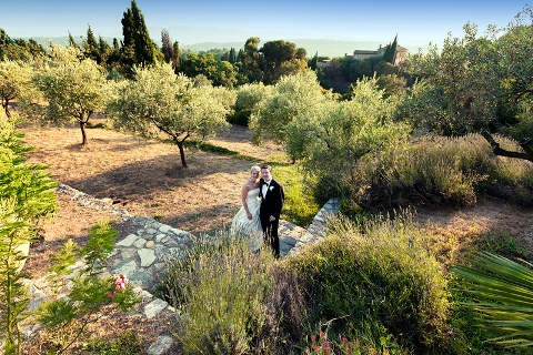 wedding olive trees