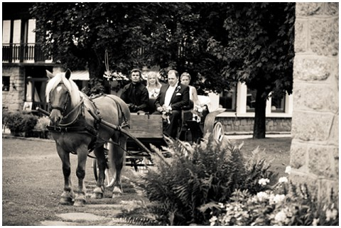 bridal horse and carriage