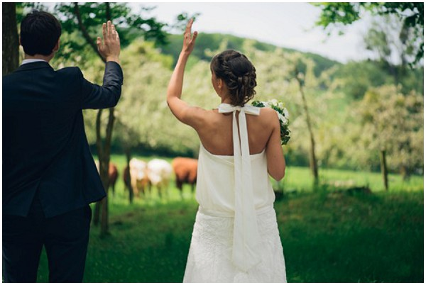 cows wedding