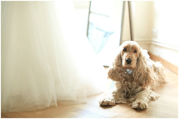 Oh such a cute dog ready for the wedding