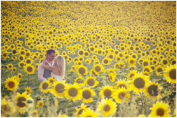 love in a field of sunflowers