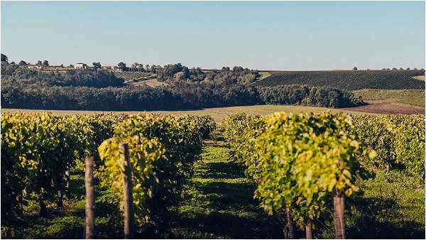 vineyards in South of France