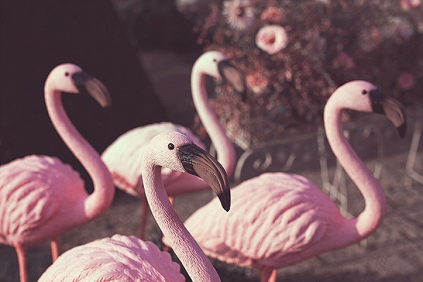 Pink flamingo wedding