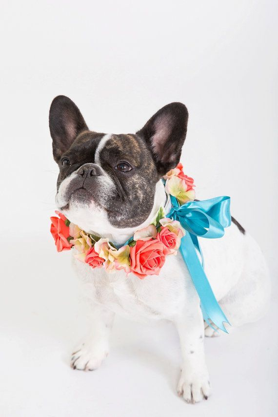 flower dog collar for weddings