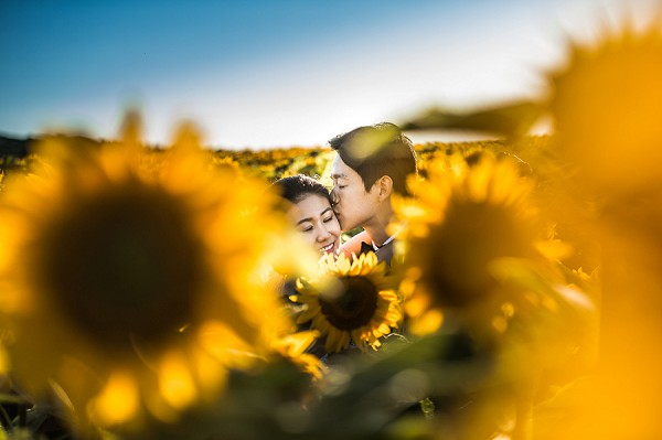 sunflower wedding picture