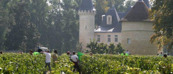 vineyard tour france