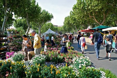 carpentras market