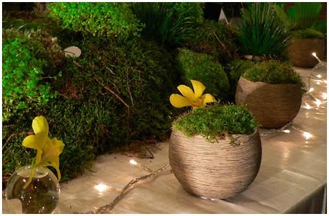moss arrangement