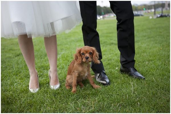 cute dog at wedding