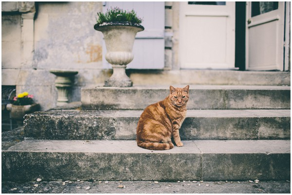 Chateau cat    Image by Samuel Docker Photography