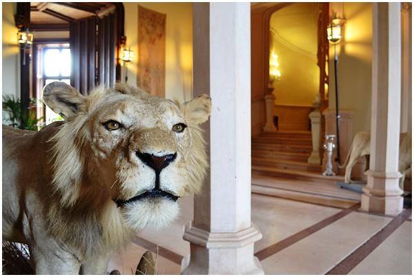stuffed lions