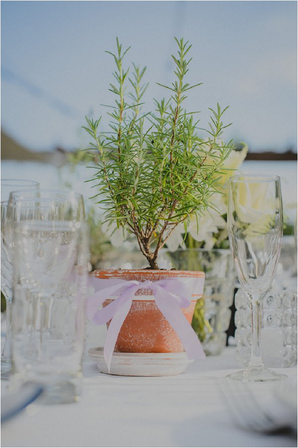 potted plant table centre