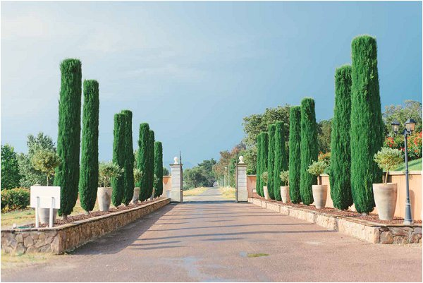 wedding vineyard Provence
