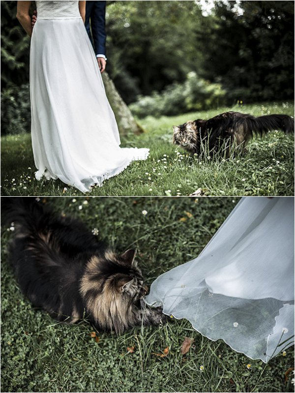 Cats on wedding day