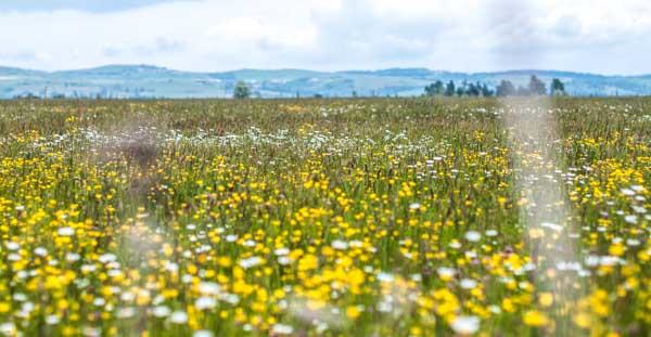 Auvergne countryside