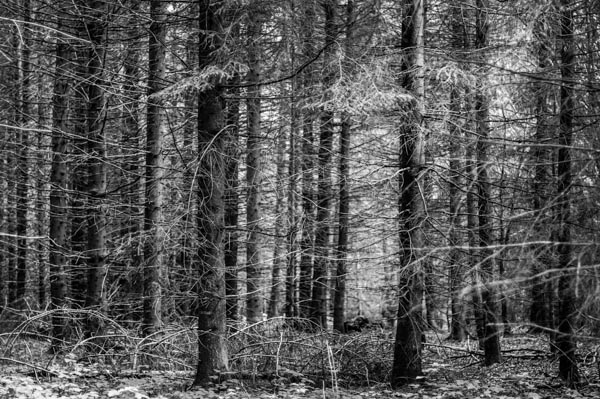 Auvergne forest