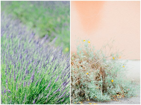images from Provence