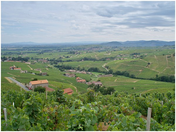 Exploring the Beaujolais region