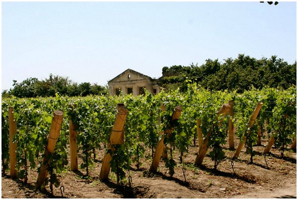 st emilion vineyard
