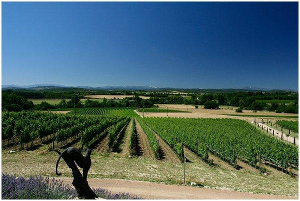 vineyard wedding in France