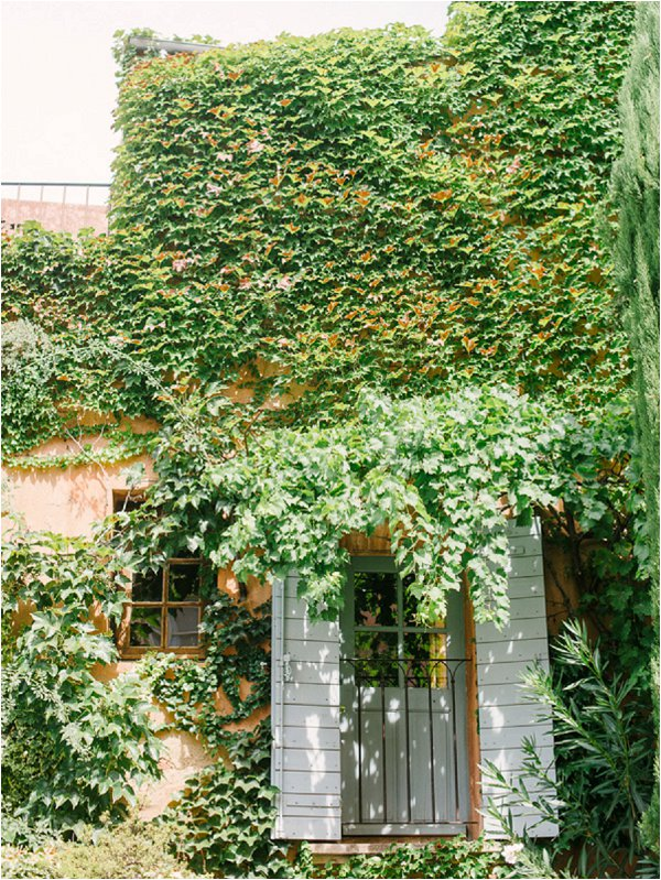 ivy covered house with blue shutters