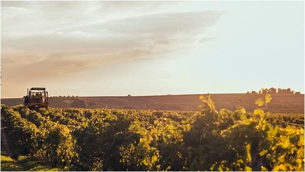 South of France vineyards