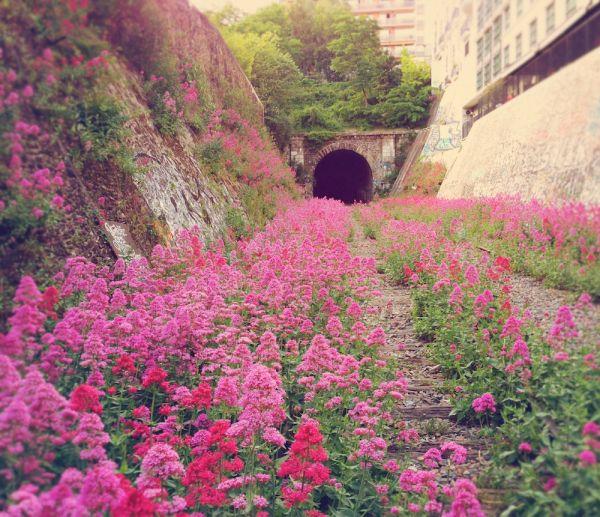 Abandoned railroad in Paris