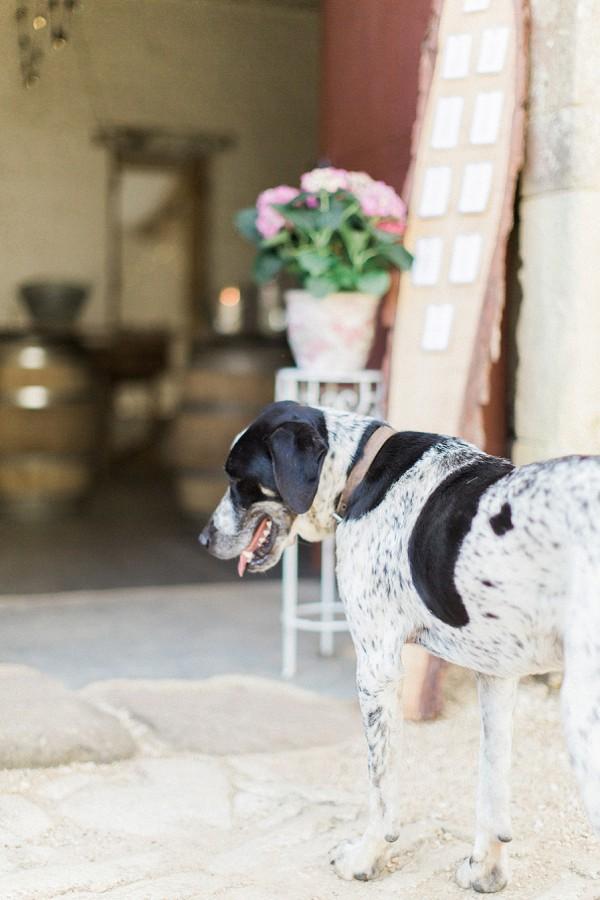 Wedding day doggy