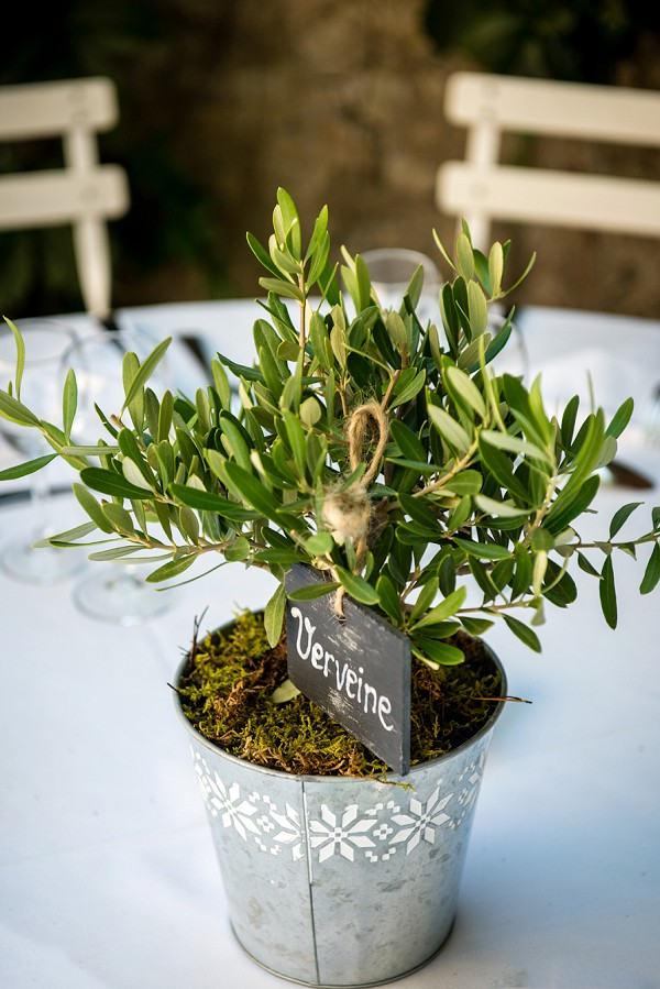 Olive tree wedding decor