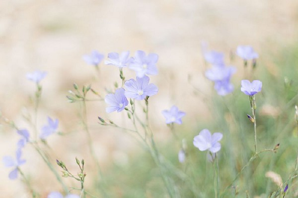 forget me not wedding flowers