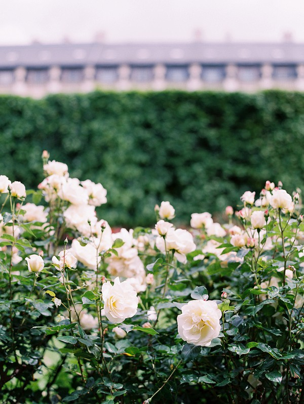 roses in Paris