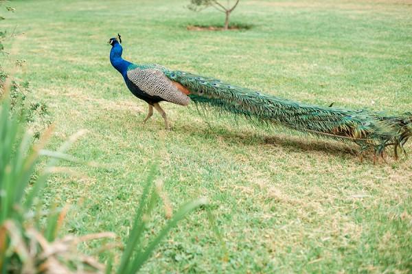 peacock wedding venue