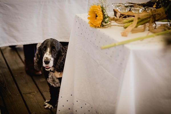 wedding day puppy