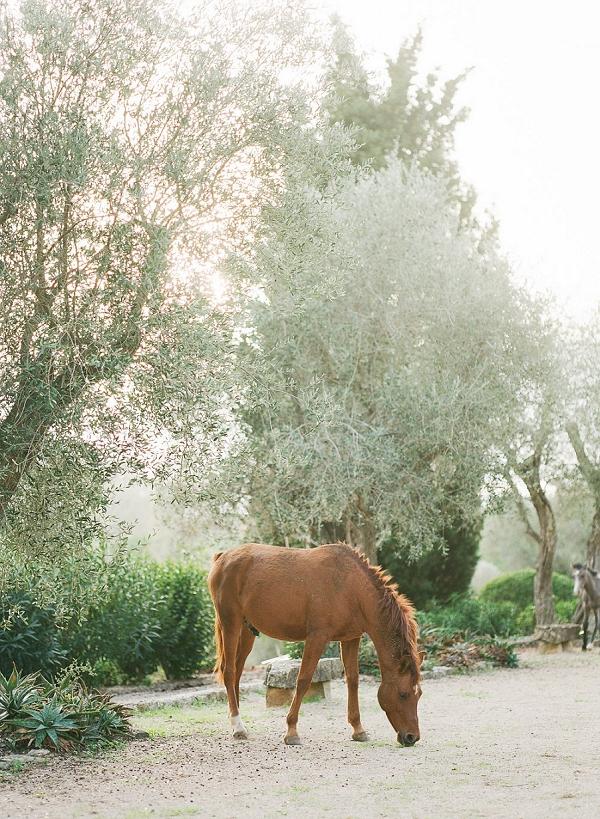 wedding day horse