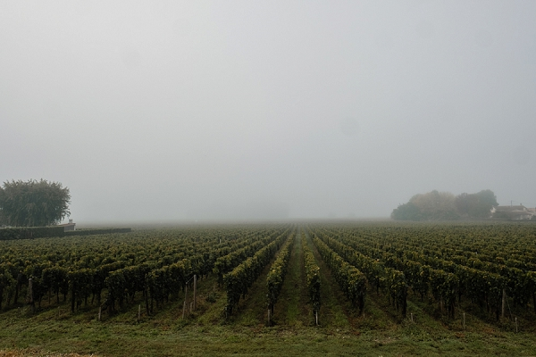 Chateau Mauvinon Bordeaux wedding wine