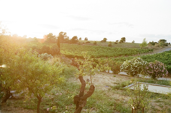 vineyard real wedding