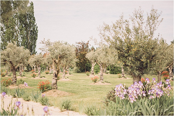 wedding in Provencal Beauty - Olive Grove and Lavender Fields on French Wedding Style