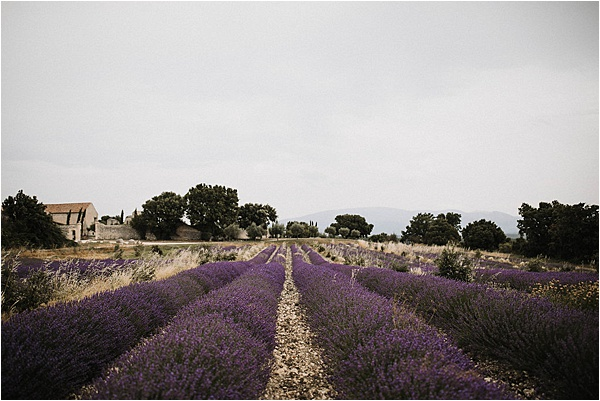 Lavender Flowers at wedding in Vaucluse France