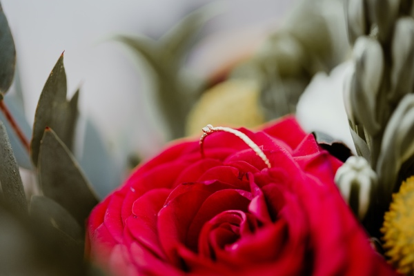 red rose details