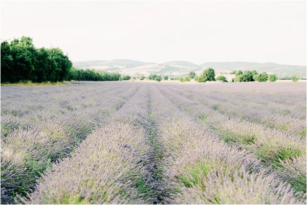 lavender fields in provence | Image by Jeremie Hkb