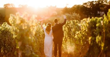 golden hour vineyard photos