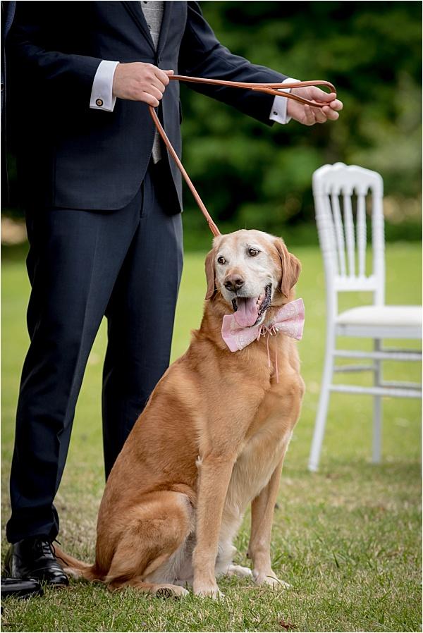 Ringbearing dog