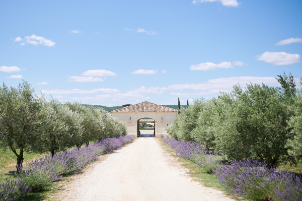 Gravel driveway lined by lavendar and olive trees leads to entrance of Domaine de Bres