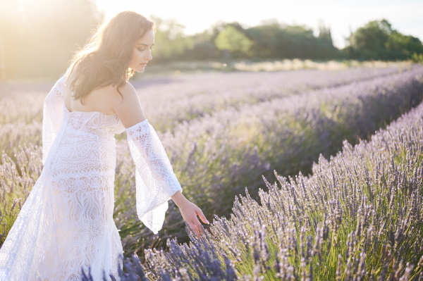 Bride in sunset of Provencal in a lavender field bends to pick lavender