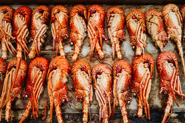 Fresh rows of bright orange lobsters is the food for a nautical themed wedding