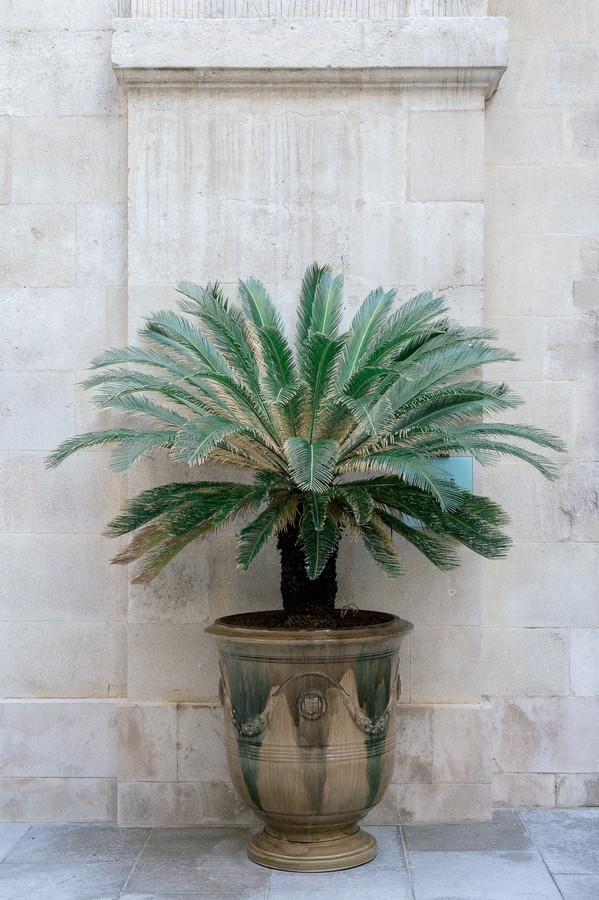Palm in outdoor pot