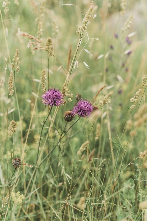 purple field flowers